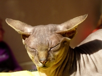 cat-show-2010-1