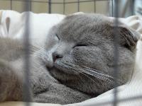 cat-show-2010-3