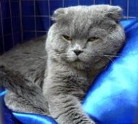 cat-show-2010-4