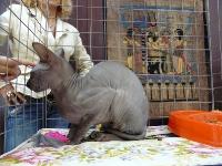 cat-show-2010-7