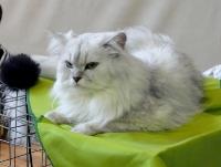 cat-show-2010-9