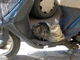 cat on motorbike