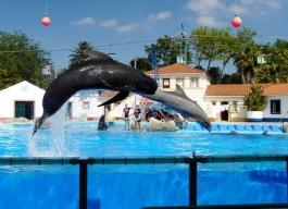 dolphin jumpers