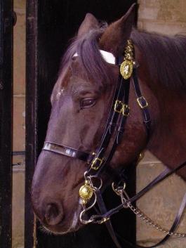 horse in London