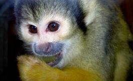 monkey in London zoo