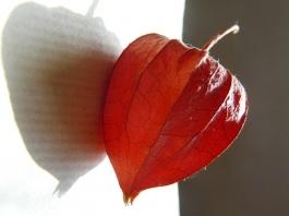 autumn lantern