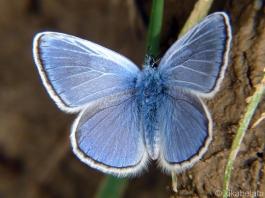 blue butterfly