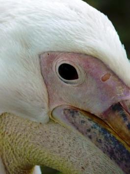 the eye of the bird