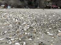 пясъчният плаж вече е осеян с едри морски камъни