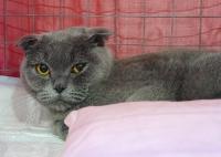 cat-show-2010-8